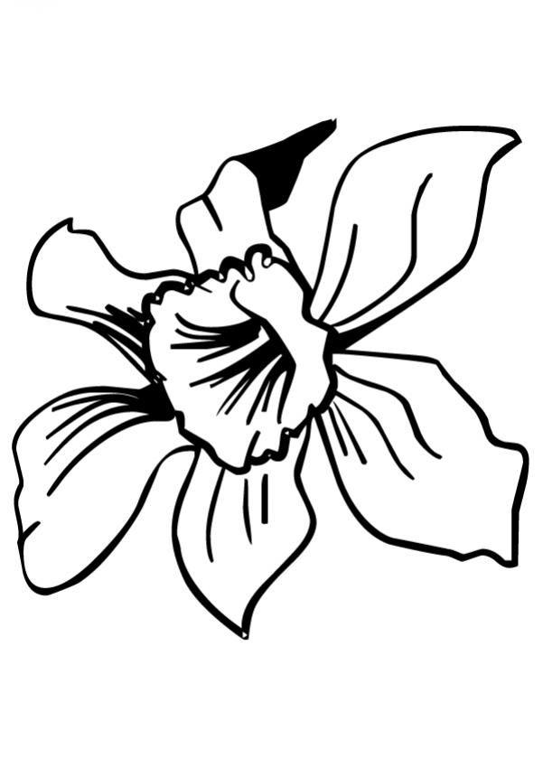 Resultado de imagen para imagenes de la orquidea para colorear