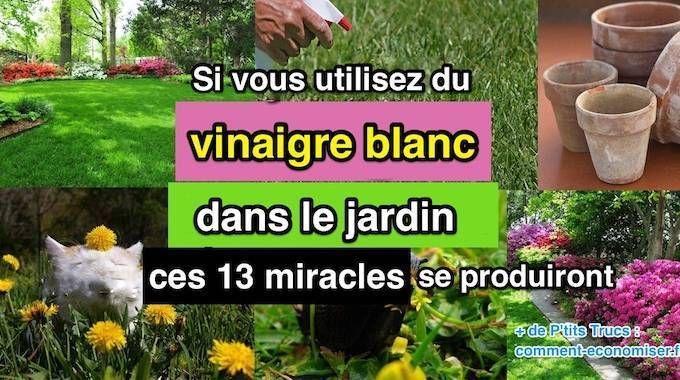 Petite Pervenche Blanche Pervenche Couvre Sol Et Plante Vivace