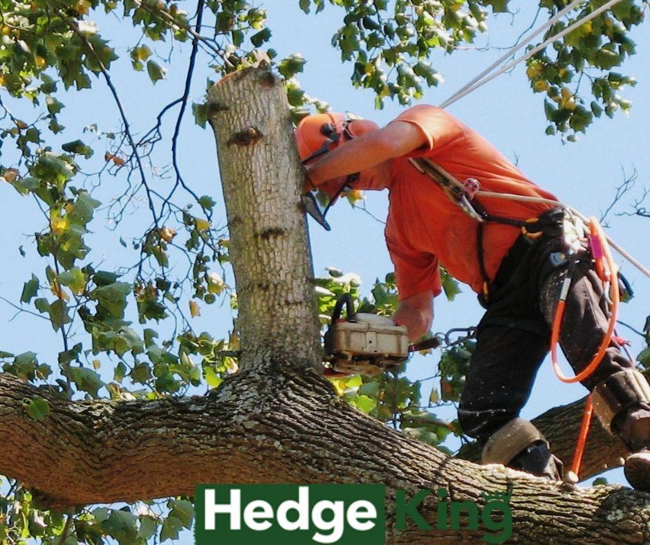 Emergency Tree Removal Service Ottawa, Stump Grinding