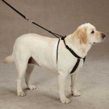 Four Paws No Pull Trainer Easy Dog Walking Harness Supplies