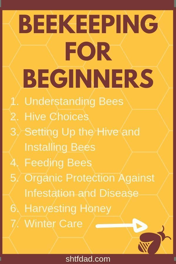 Photo of How To Start Beekeeping For Beginners