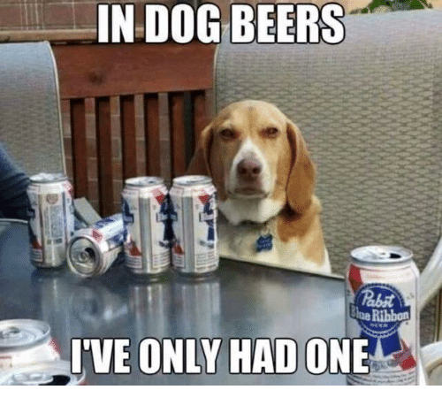 25 Seriously Funny Beer Memes Funny Animals Funny Animal