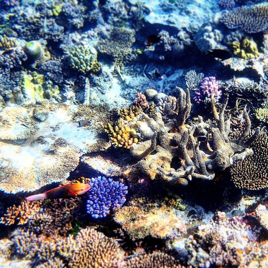 Under the Vanuatu sea  ⠀ #KeepCalmAndJasTravel