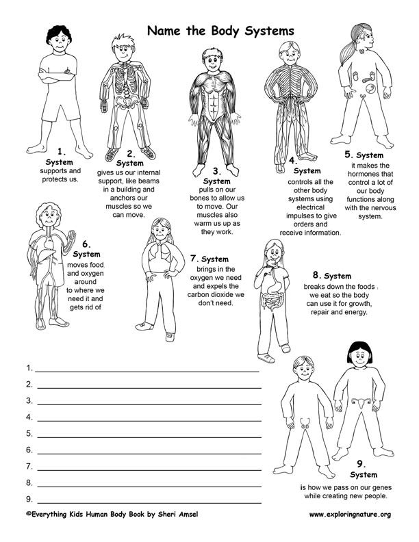 Anatomy Human Body Systems Overview Body Systems Middle School Body Systems Skeletal System Worksheet Human body systems matching worksheet