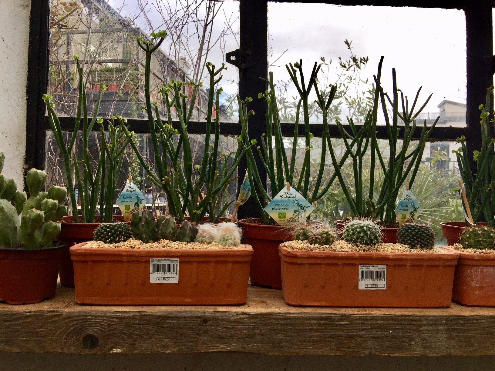Cactus Window Box Cacti Succulents Indoorplants Urban Plant