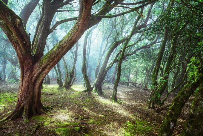 La magia de las montañas de Anaga http://www.escapadarural.com/blog/la-magia-de-las-montanas-de-anaga/