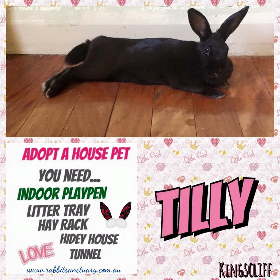 Black Rabbit Adoption Rabbit Adoption Pet Rabbit Your Pet