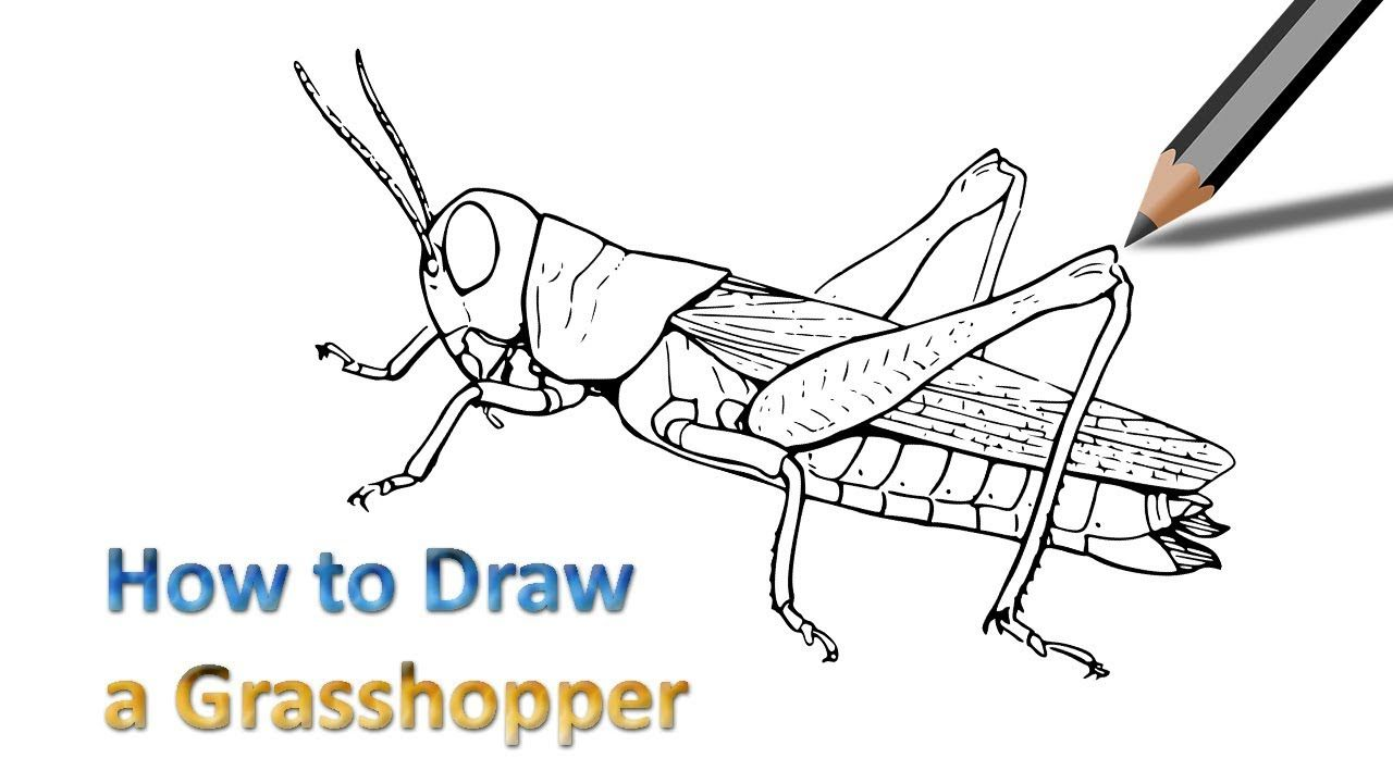 Draw A Grasshopper Easy Drawings Drawings Grasshopper
