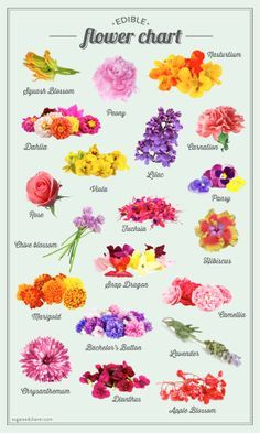 sugar and charms edible flower chart - Common Flowers In Arrangements