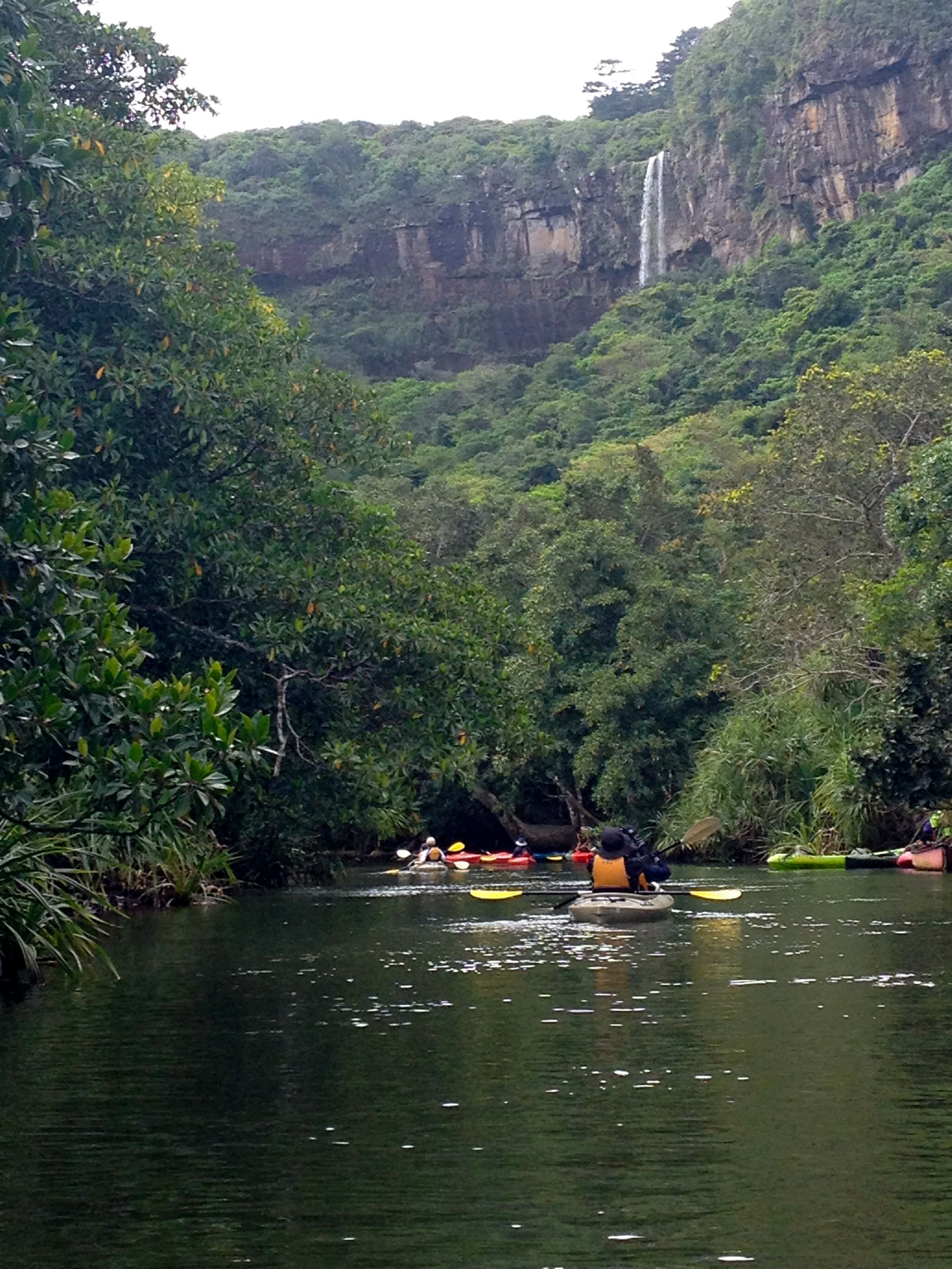 Kayaking Through Mangrove Forests In Iriomote Island Japan Iriomote Is