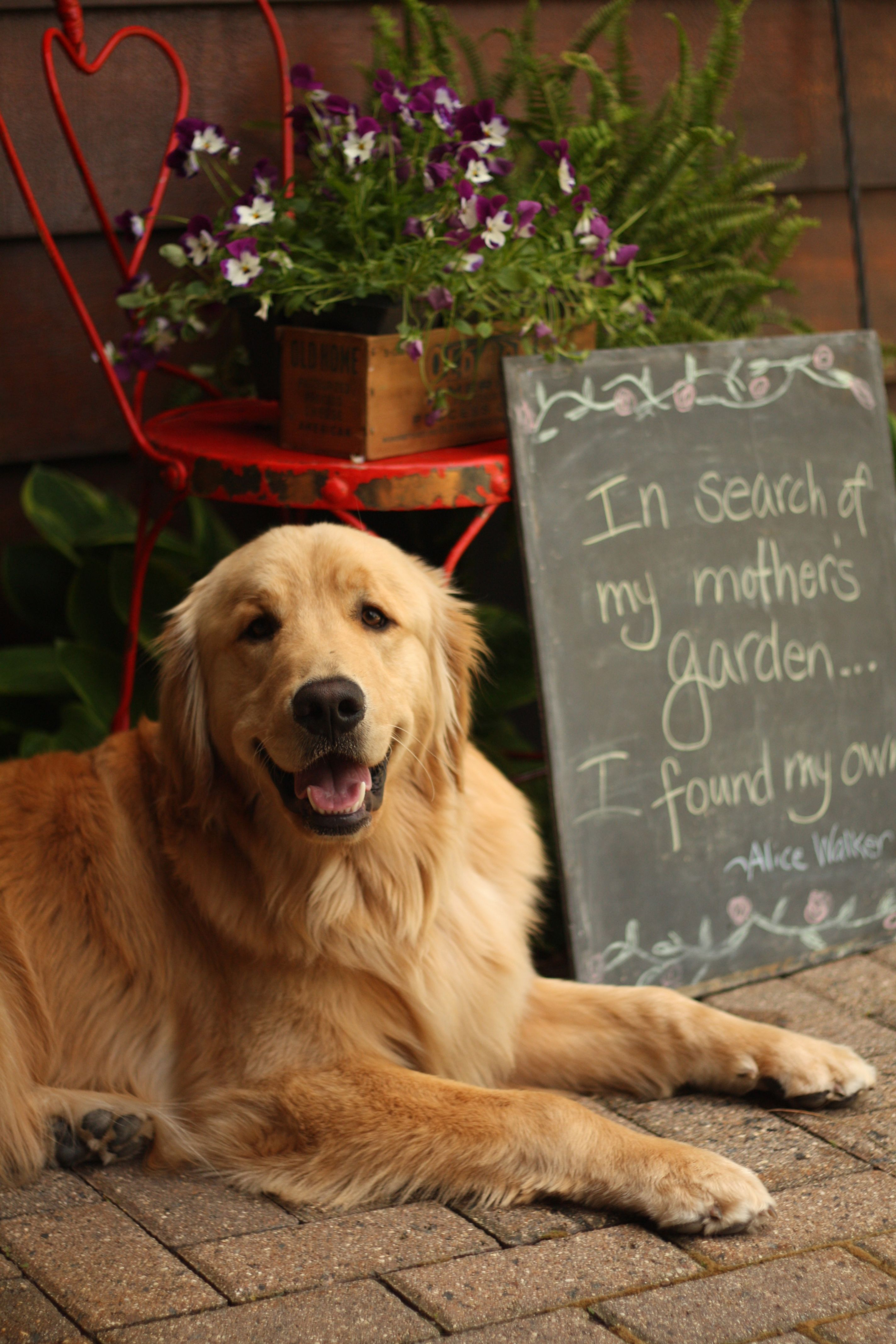 Goldens Always Look So Happy Dogs Golden Retriever I Love