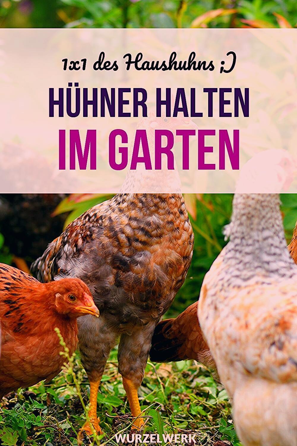 Photo of Es lebe das Haushuhn! Hühner halten im Garten – Wurzelwerk