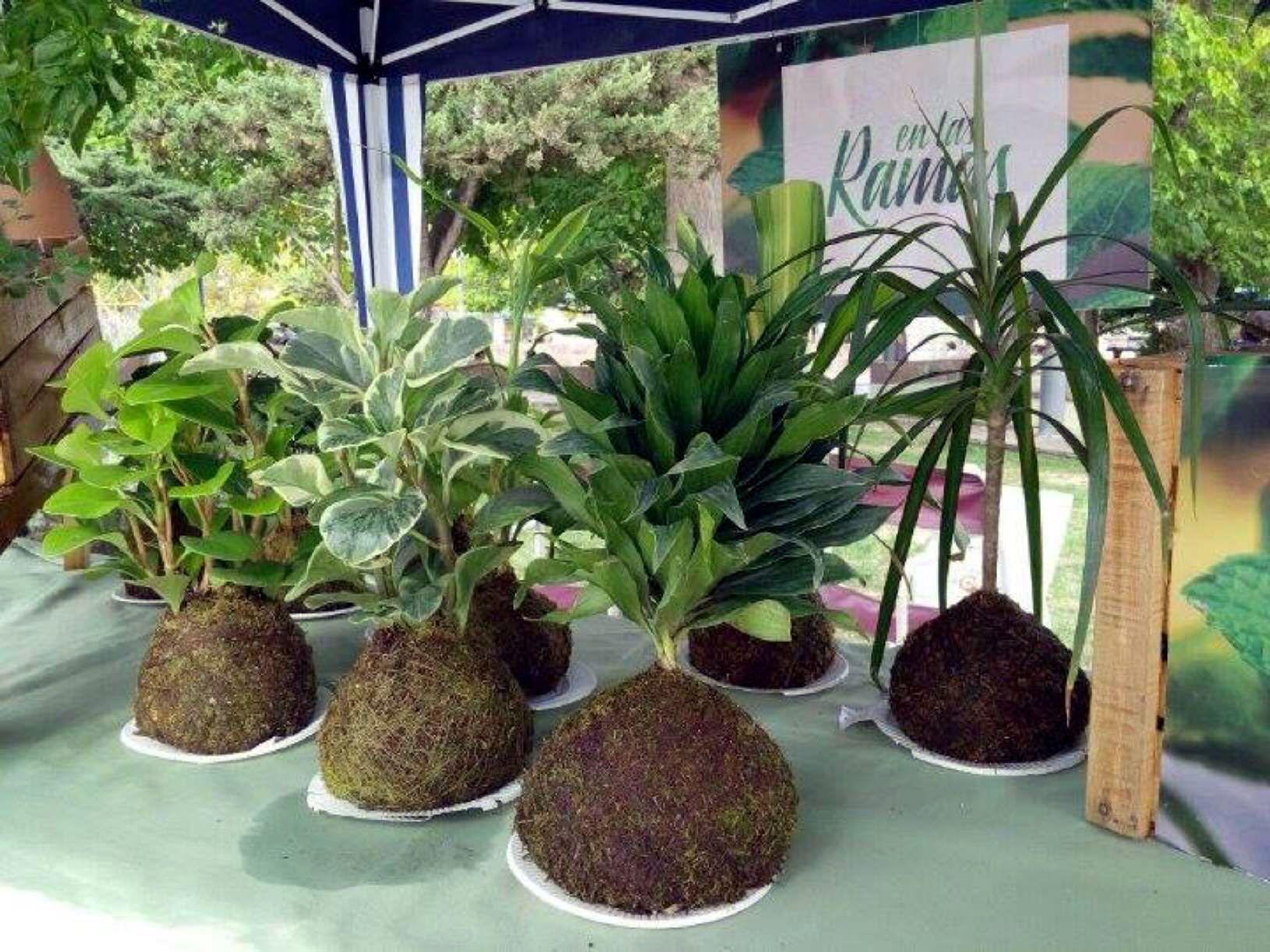 imagen   Around the world   Pinterest   Plantas, Plantas de interior ...
