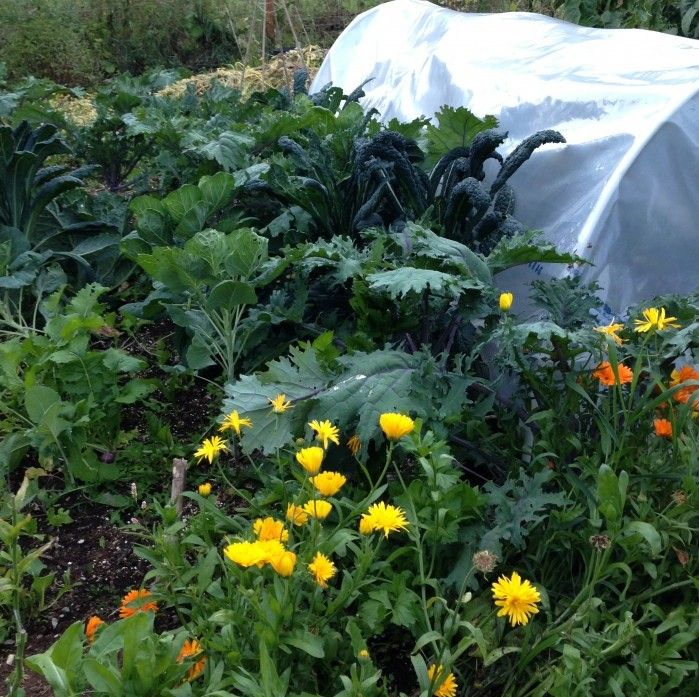 Polyculture Gardening Examples Permaculture gardening