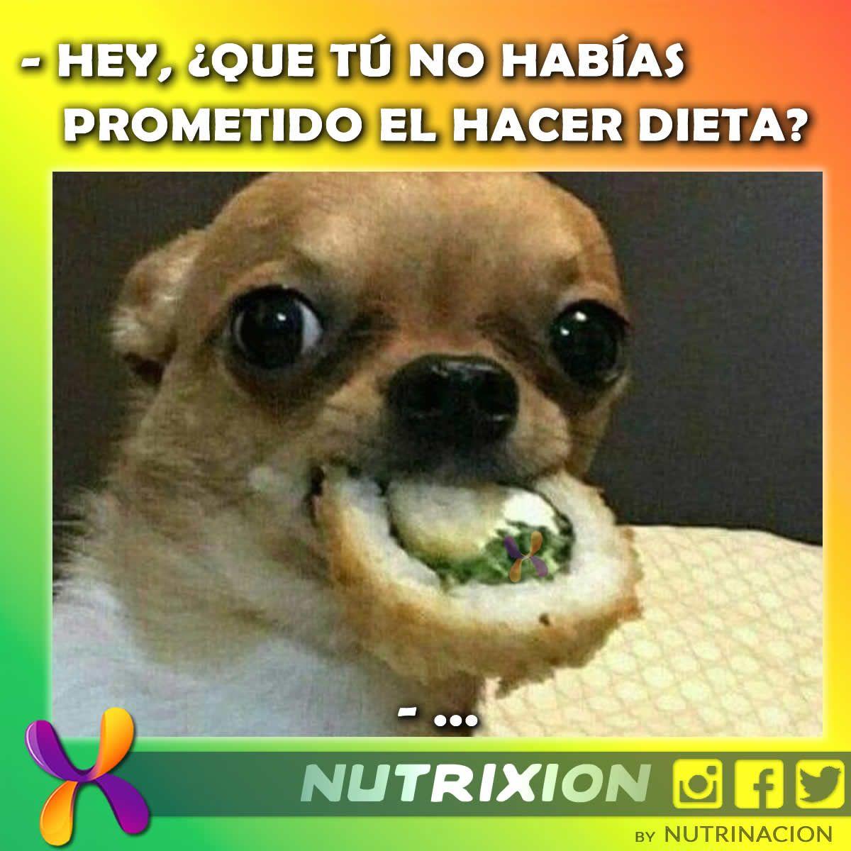 Nutrimeme Memes De Animales Divertidos Mascotas Memes Memes Perros