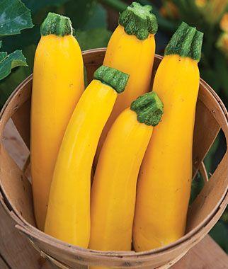 eds NON GMO  best* SquashedGolden Zucchini Squash Organic 25