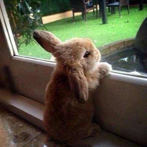 Judy wartet auf ihren dummen Fuchs, Nick. Ich vermisse dich :( #cutecreatures