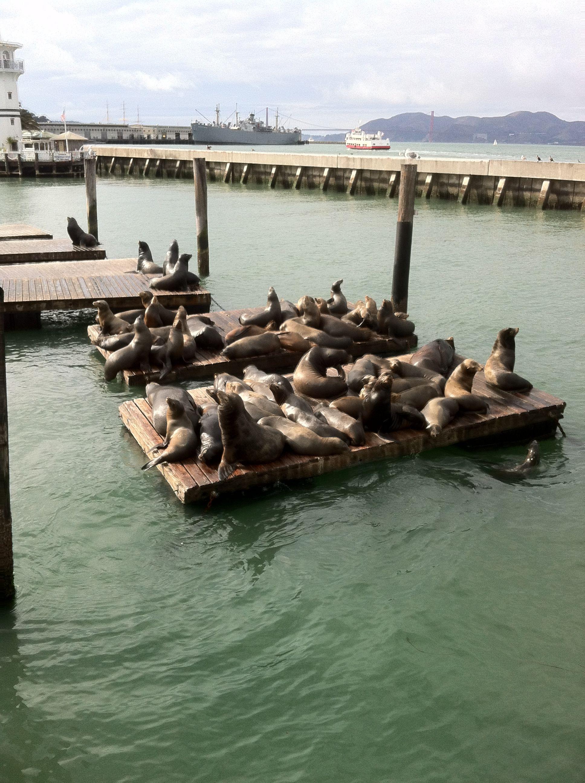 Www Aaa Com Redirect Fishermans Wharf San Francisco Tours Fisherman S Wharf San Francisco