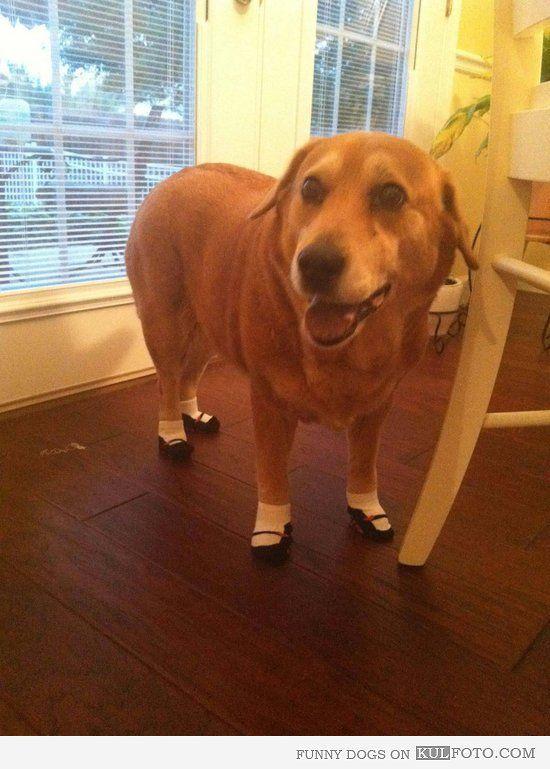 Dog rocks socks