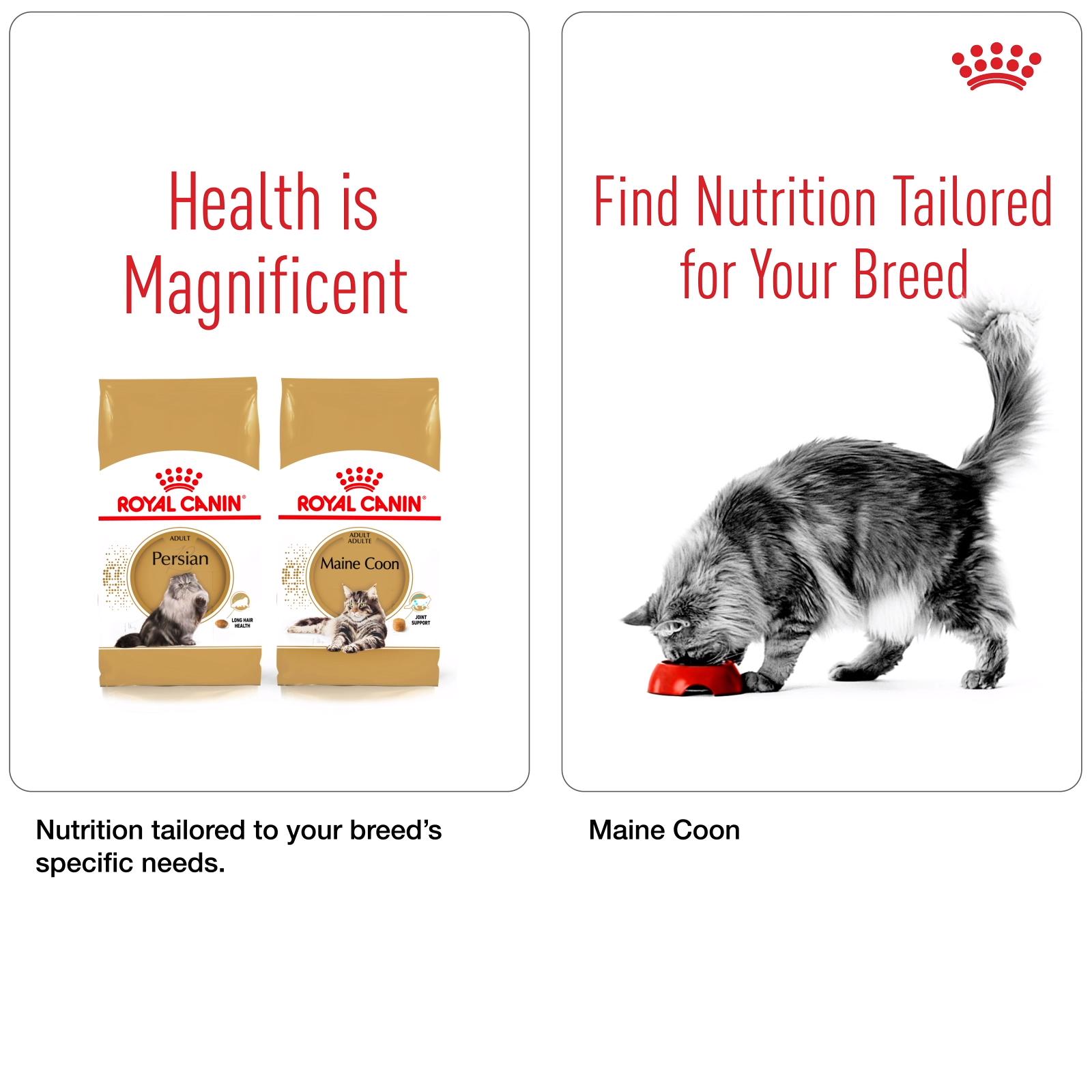 Pin By Ad Verhagen Part 1 On Breed Nutrition Video Cat Breeds Breeds Eukanuba Dog Food