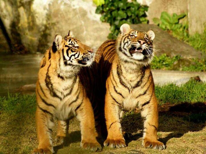 Amazing creatures! ツ