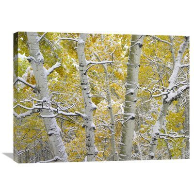 Global Gallery Nature Photographs Snow-covered Aspen Forest Near Kebbler Pass, Gunnison National Forest, Colorado Photographic Print on Wrapped Can...