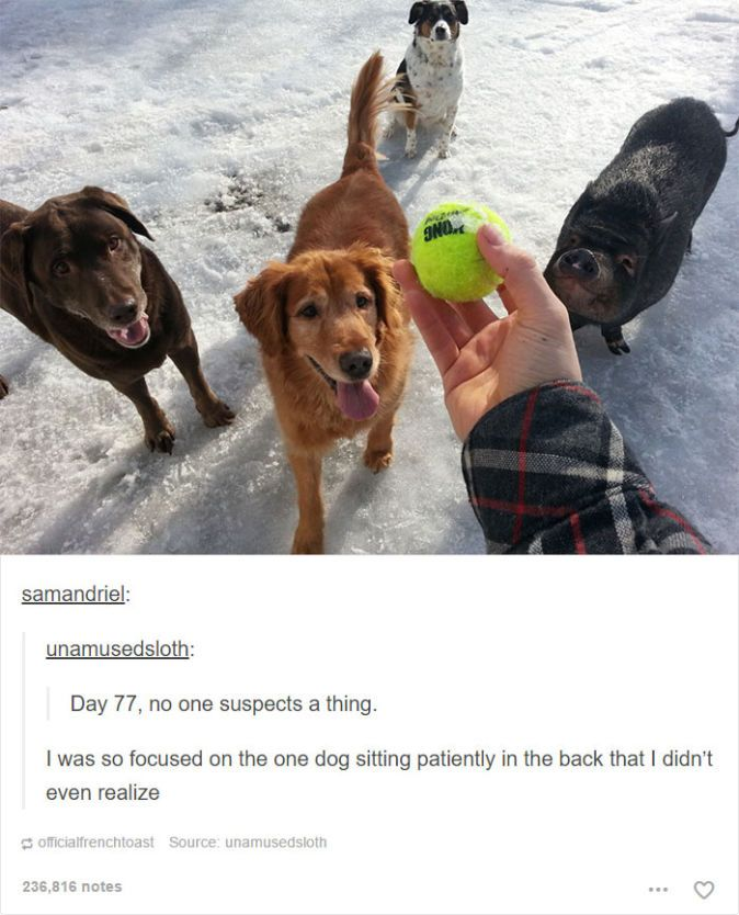 Dog Posts On Tumblr That Are Impossible Not To Laugh At Posts - 24 tumblr posts about dogs that are impossible not to laugh at
