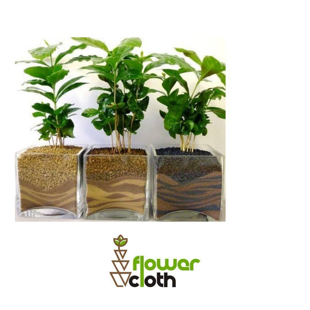 Tersedia juga ☑️Pot bunga keren ☑️Rak bunga minimalis. ☑️Dekor rumah atau kamar lebih simple ☑️Berbagai macam kaktus. ➖➖➖➖➖➖➖➖➖➖➖➖➖➖➖➖ DM for more info 😁😁😁 @flowercloth_  @flowercloth_  @flowercloth_ ➖➖➖➖➖➖➖➖➖➖➖➖➖➖➖➖ . 📞 085743881665 #tanamanindoor #pohonkopi #kopi #bibitkopi #tanamanhias  #kayamanfaat #kaktus #suculents #suculentas #scullent #sculent #seculent #dekorasikamar #dekorkamar #dekorrumah #kaktus #dekorrumahminimalis #dekorcafe #homedecor #homesweethome  #bunga #dekorasirumah  #ta