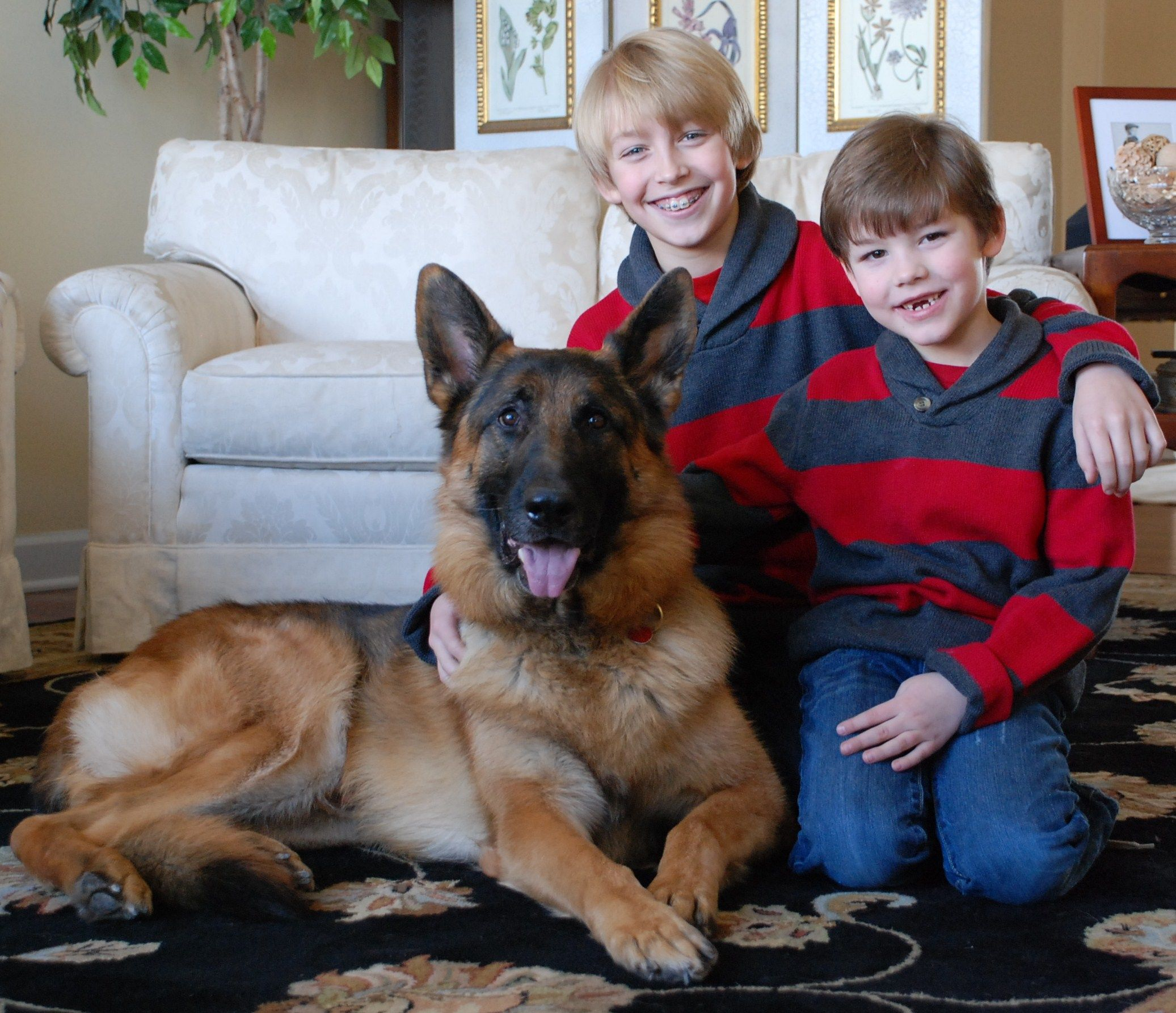 German Families Our German Shepherd Puppies And Dogs Make Outstanding Companion German Shepherd Puppies Training German Shepherd Dogs German Shepherd Puppies