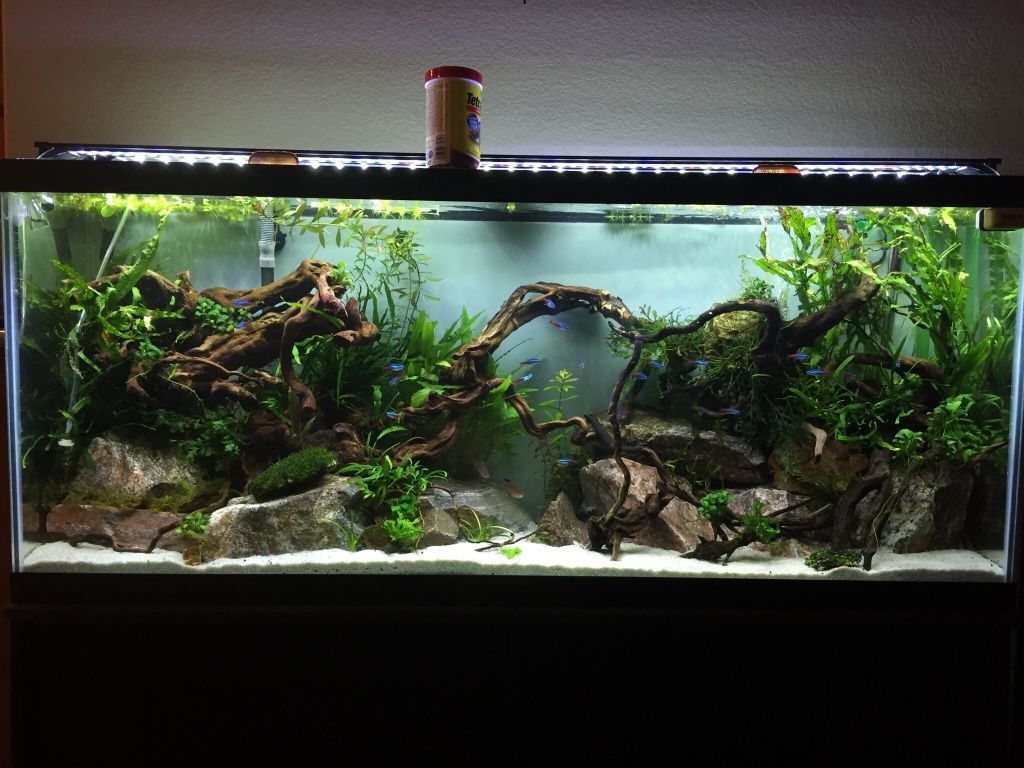 Have you ever seen a nice looking 55 gallon page 2 for Planted tank fish