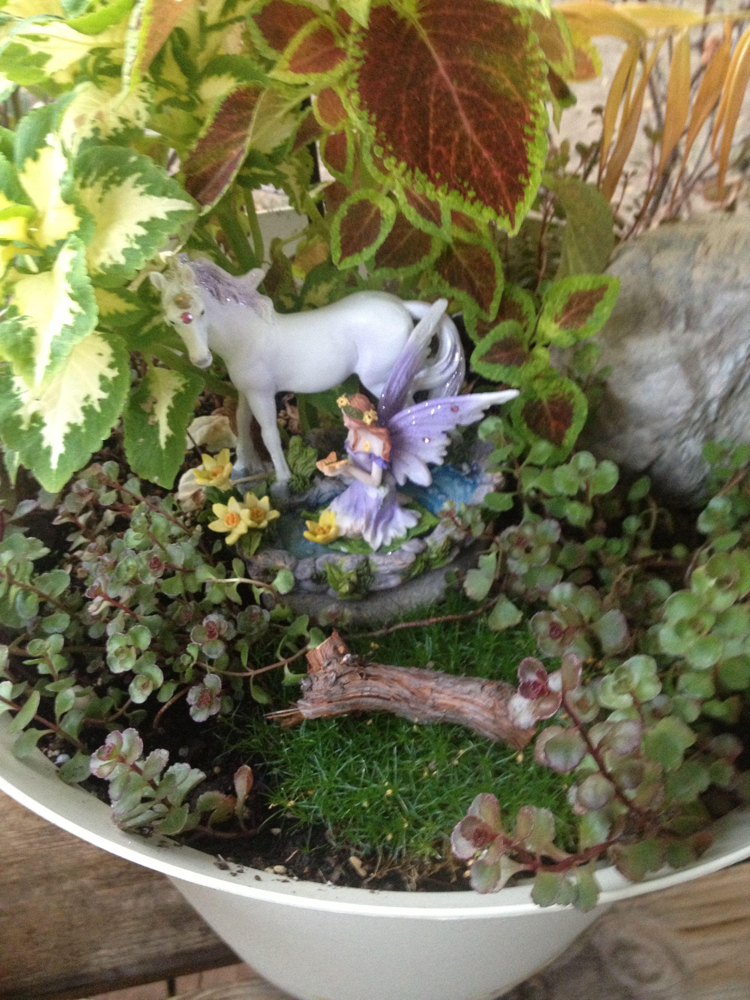 Fairy and unicorn garden❤