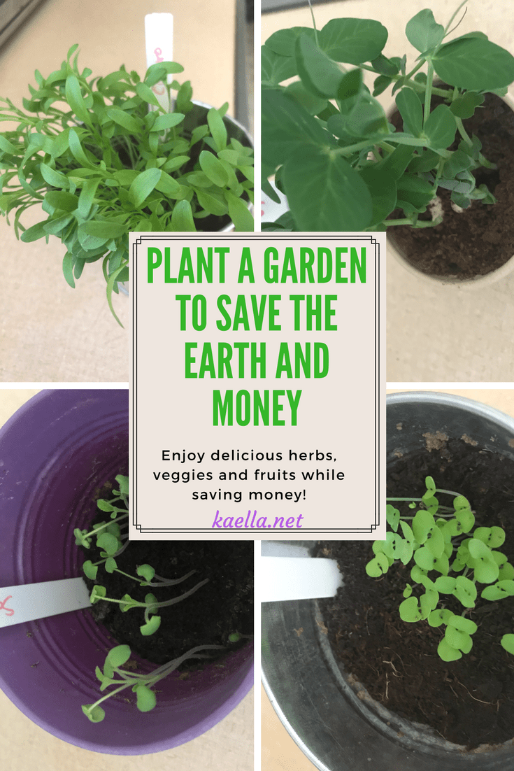 Plant Seeds To Save Earth And Money With Images Plants