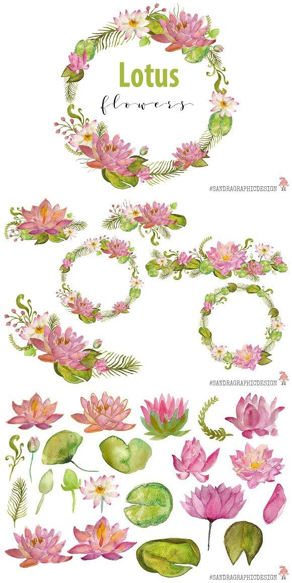 Lotus Flowers Watercolor Clip Art Flower Clipart Watercolor Flowers