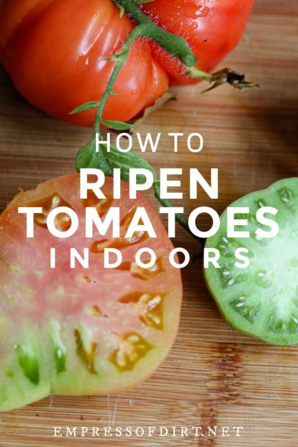 How To Ripen Tomatoes After Picking Empress Of Dirt How To Ripen Tomatoes When To Pick Tomatoes Green Tomatoes