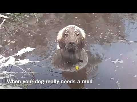 Picture Of A Dog With Mud On Him