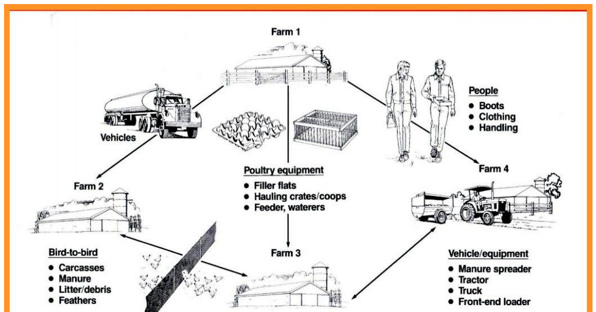 Prevention & Control of Poultry Diseases | Poultry Farming