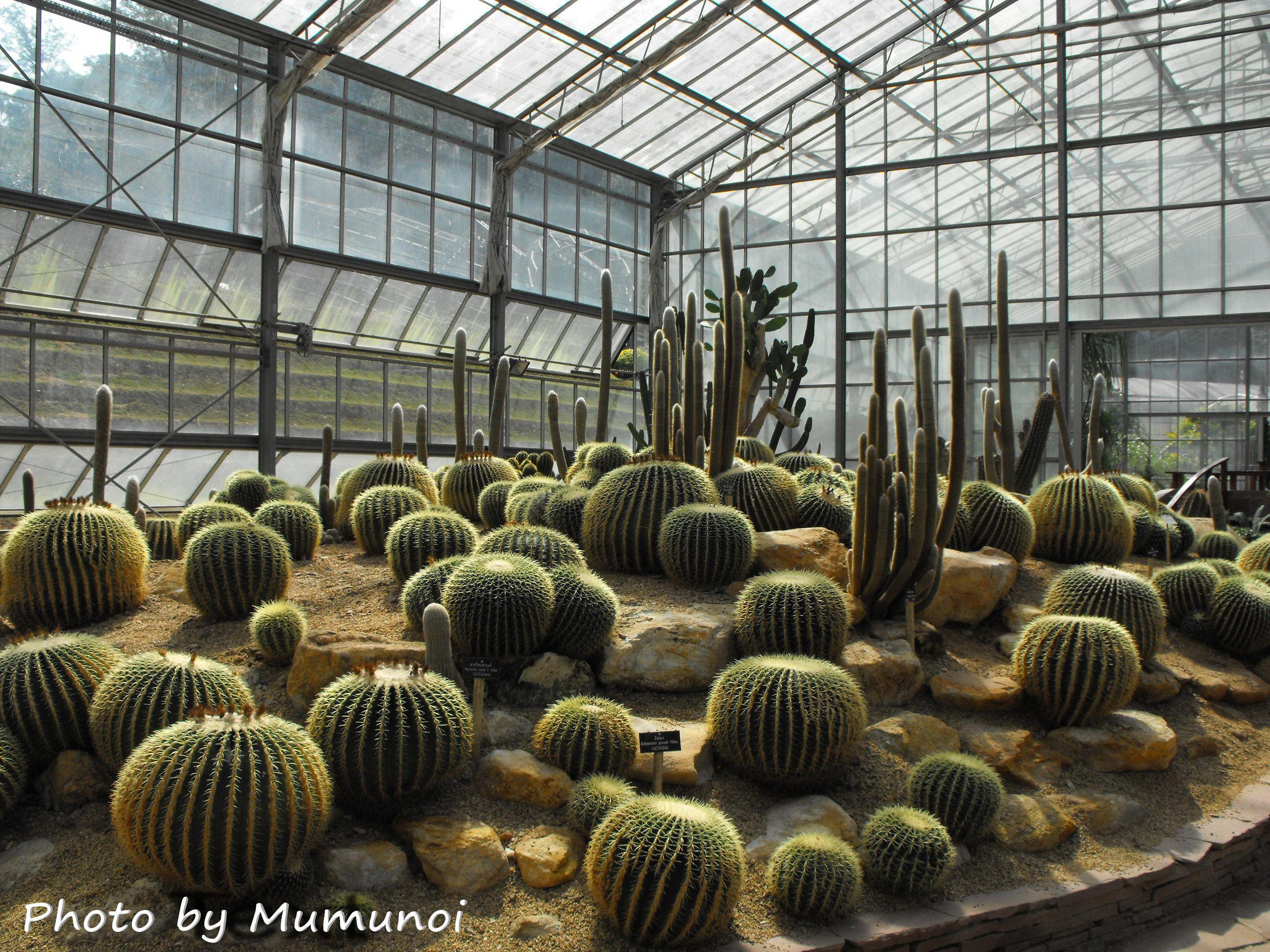 botanic ค้นหาด้วย Google Botanical gardens, Cacti and