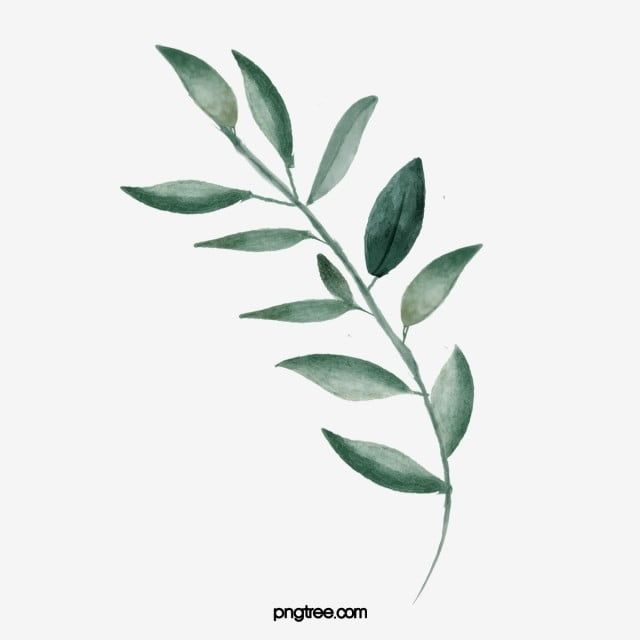 Folhas De Aquarela Clipart Aquarela Verde Folha Imagem Png E Psd Para Download Gratuito Folhas De Aquarela Flores Em Aquarela Folhas Verdes