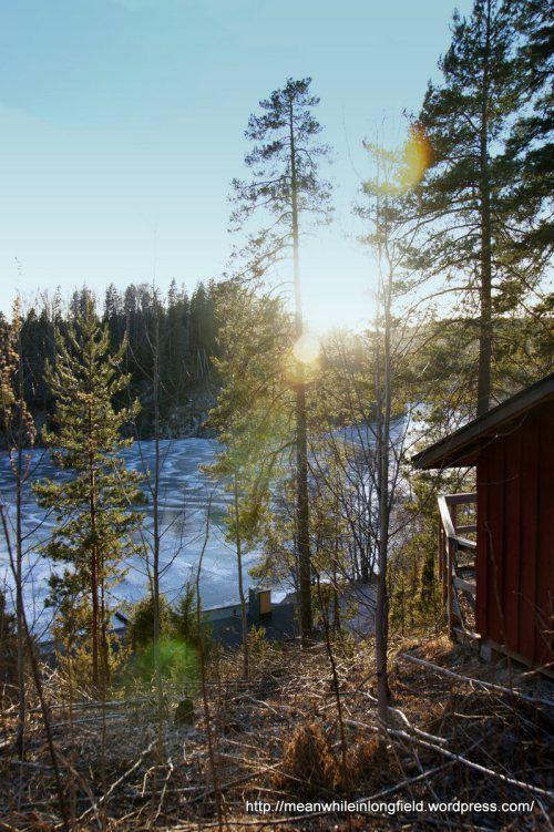 Finnish forest Nuuksio