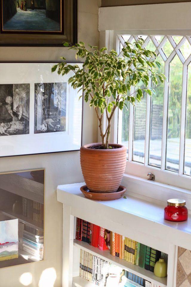 plantes d polluantes entretien facile purifiez l air en. Black Bedroom Furniture Sets. Home Design Ideas