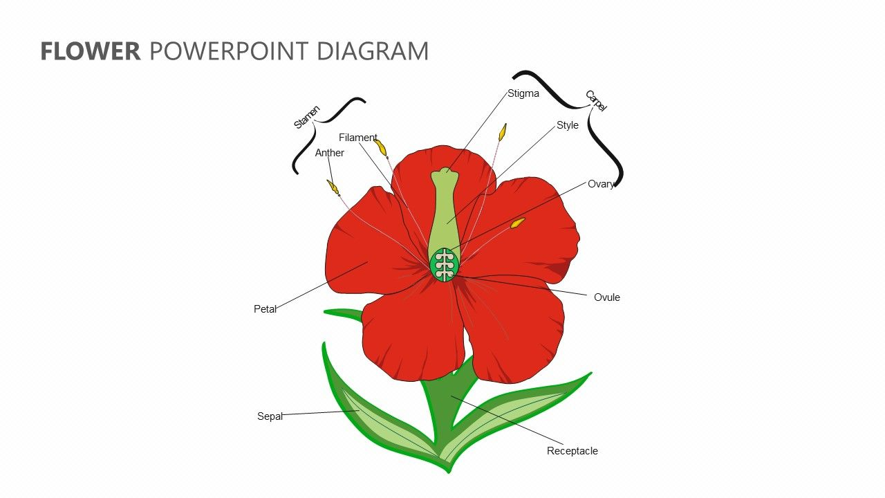 Flower Powerpoint Diagram Diagram Of A Flower Parts Of A Flower