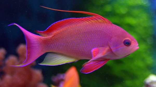 Top 12 most beautiful fish in the world aquarium fish for Live saltwater fish