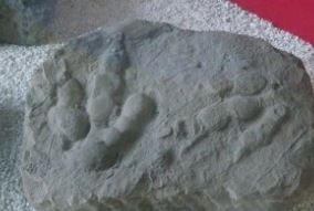 What are trace fossils? | Dave Hone's Archosaur Musings