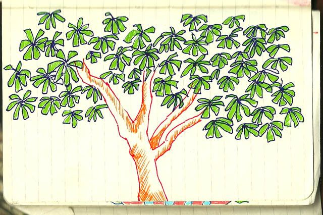 Mango Tree Images For Drawing