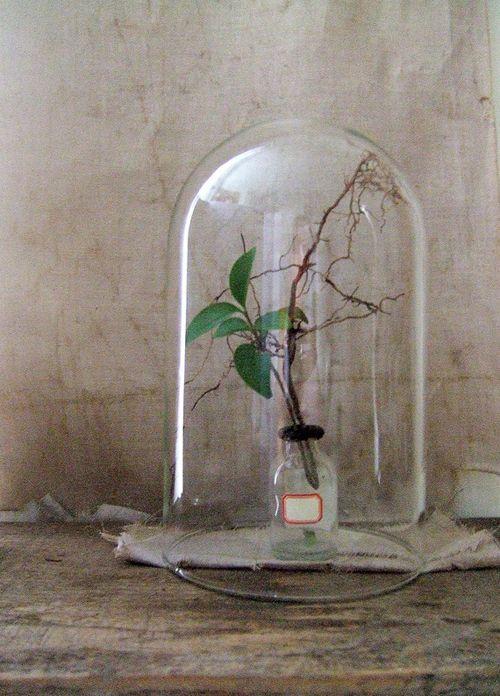 Poppytalk: DIY: Terrarium-inspired Display