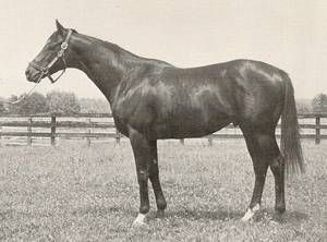 Bold Forbes(1973)Was Another Grandson Of Bold Ruler And His Female Family Is Full Of Quality Horses Such As Teddy, Man Of War, Jamestown(All From St. Simon Fun) And 2nd Broodmare Sire Blenheim, Also Broodmare Sire Of Nasrullah.: