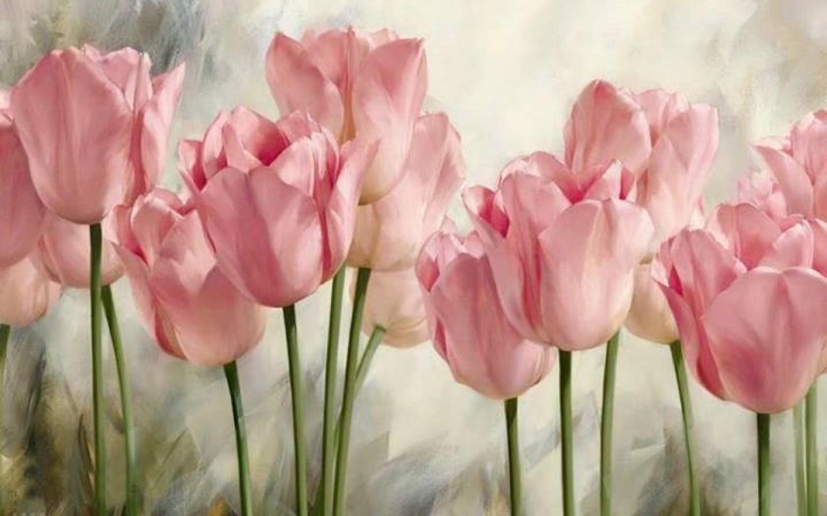 Los Tulipanes Rosados Suaves Hd Fondo De Escritorio