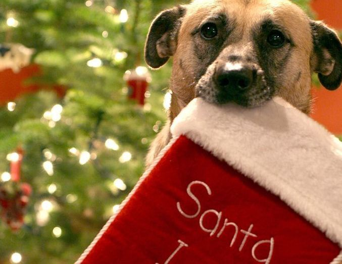 Funny Contrite Dog Of The Day Petslady Com Christmas Humor Santa Claus Is Coming To Town Christmas Dog