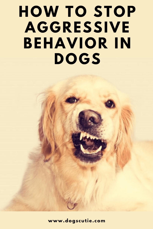 6f2c78814ff299eb030573f74e9927d3 - How To Get A Dog To Stop Aggressive Biting