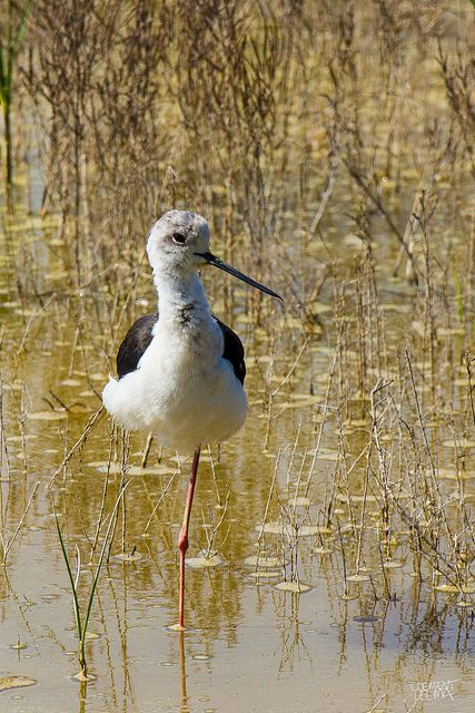 Dsc02851 Happy Birds 2 Pinterest Birds Heron And Shorebirds